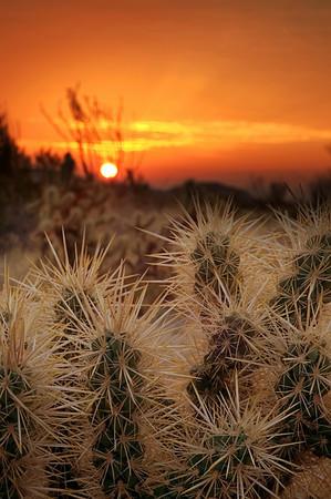 Anza Boreggo Desert, California - Steve Sieren