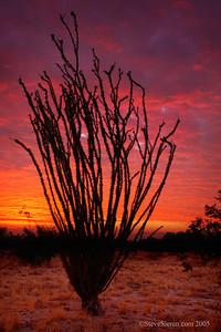 Ocotillo Silhouette Anza Borrego State Park