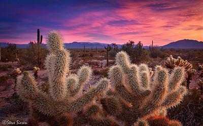 Cautious Sunrise  Sonoran Desert south of Pheonix, Arizona