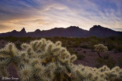 Organ Pipe National Park - Sonoran Desert