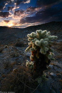 The Witch Doctor  Anza Borrego State Park - California Colorado Desert Mexican Border