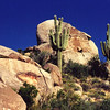 Saguaro Cacti along the route, AZ