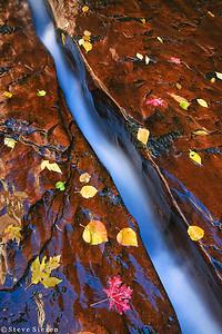The Dividing line Zion National Park