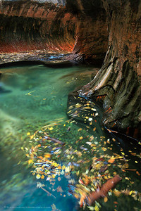 Another World Zion National Park