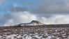 Snowed Fence 1293p