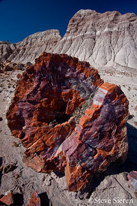 Petrified Wood Forest Arizona.