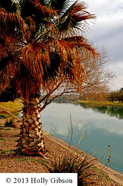Palm tree along the Pecos River - Carlsbad, NM