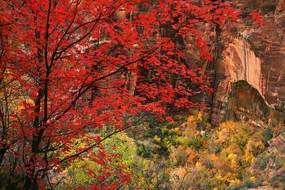Canyon Color Zion National Park