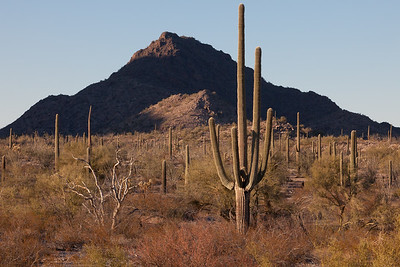 Organ Pipe Pyramid 5502