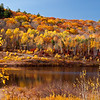 Shores of Everett Lake (reservoir).  Even though it's past peak, I really like the golden glow.<br /> <br /> Why it's in the best of 2010 - for a lot of reasons, some of them emotional.  You see, when I took this, I'd just come from my first post-op doctor's appointment which was really one of many cancer screenings I'll go through for the next 5 years.  When I was diagnosed and the surgery scheduled I thought for sure I'd not be able to shoot in the fall due to recovery issues or possibly chemo/radiation.  As it turned out, I only needed the surgery which I recovered from quickly and I could shoot pretty actively only 4 weeks later.  <br /> <br /> Technically this photo rocks.  The color and the clarity is terrific and I remember hunting around on the bank looking for just the right foreground elements to frame the shot.  I think the composition works well and just look how those birch trunks pop.
