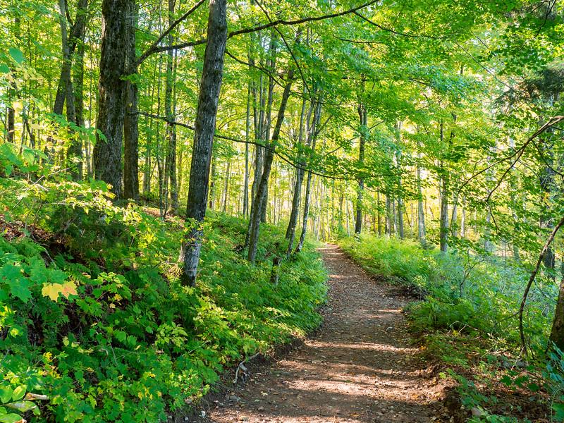 Timm's Trail