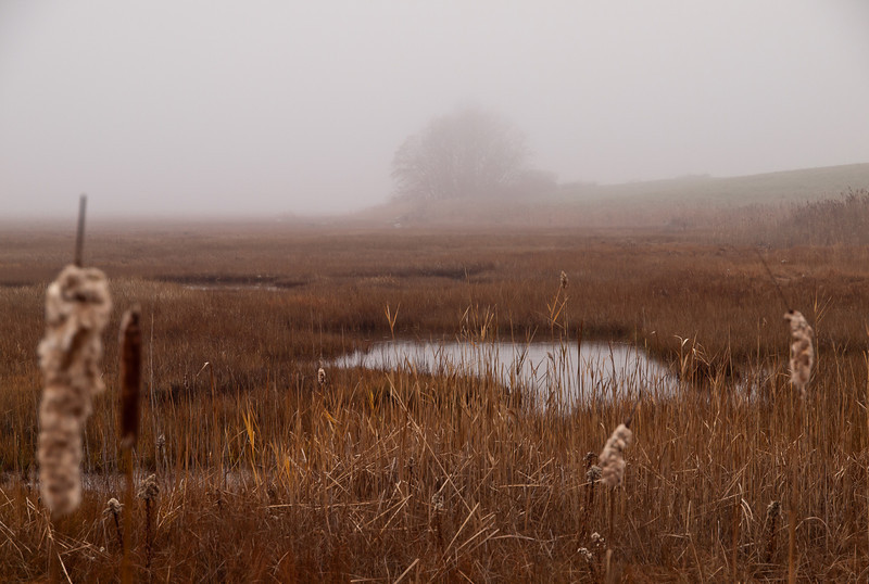 Marsh view at Parker River Nat'l Wildlife Refuge on Plum Island, Mass.  It was raining, but I still had to stop the car about every 20 yards to shoot the shapes in the fog.
