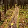 Bradford Atlantic Cedar Swamp