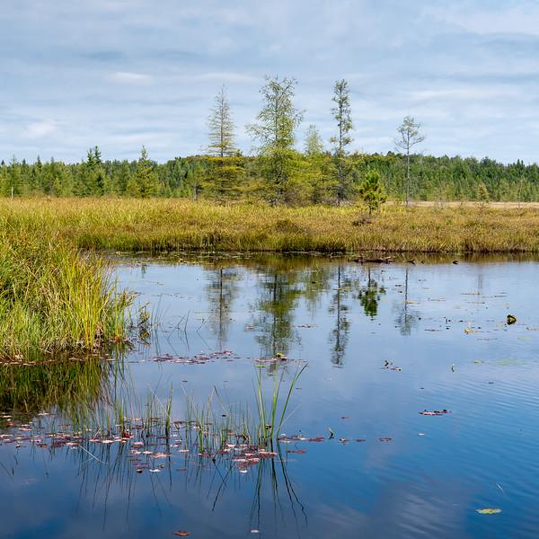Game Pond bog