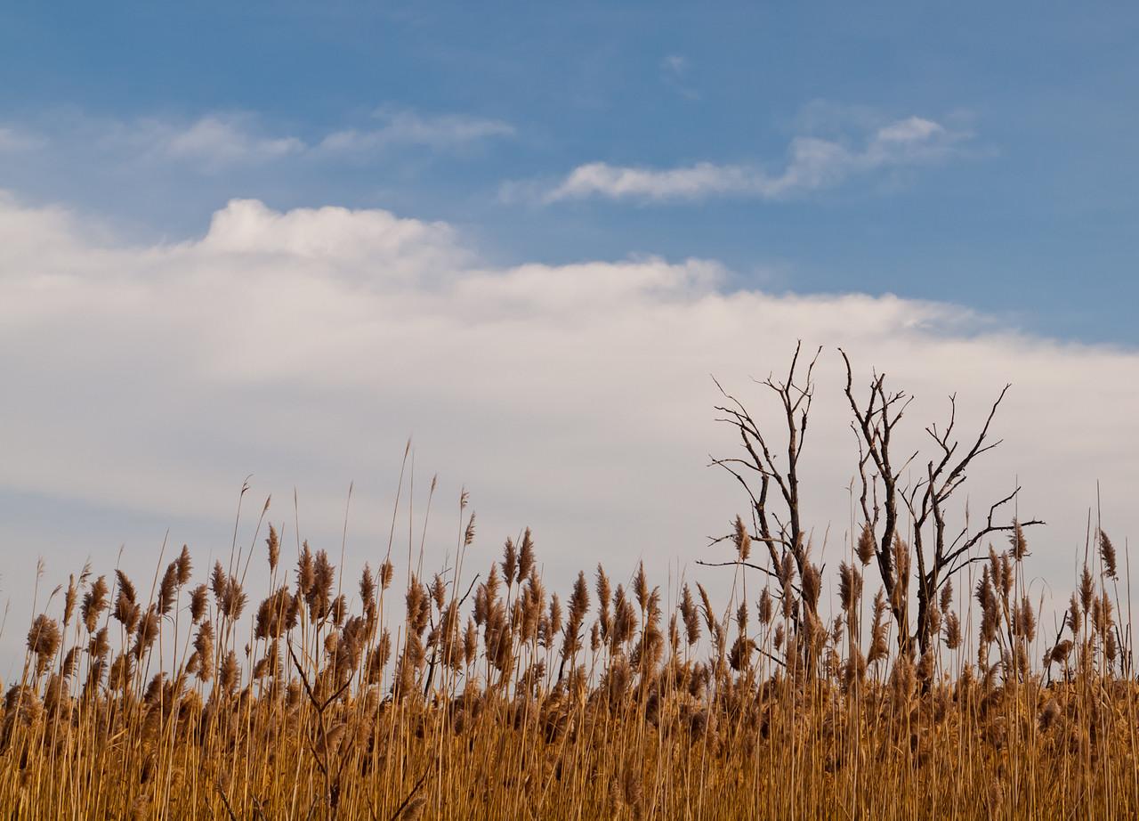 The Great Marsh, Salisbury, MA