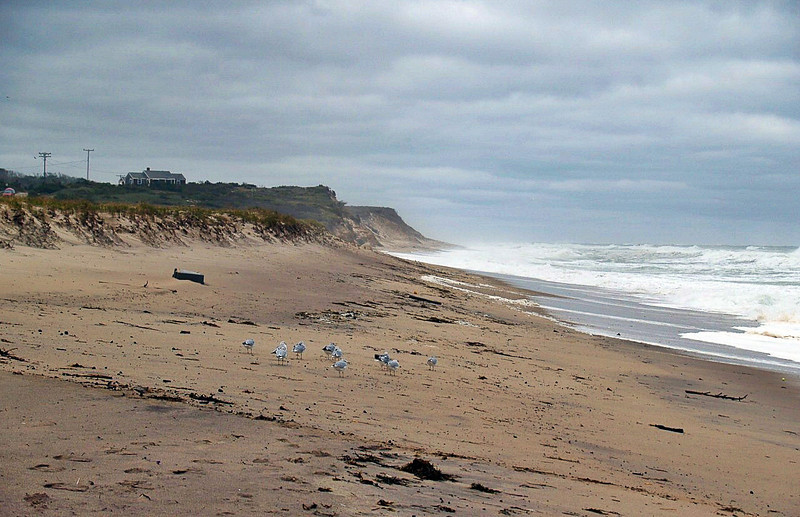 Seagulls after the storm.  The wind was blowing like hell, but they stayed planted.