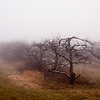 As promised, I hit a nearby apple orchard in the fog. I'd like to find one with a bit more hilliness. Maybe next time.