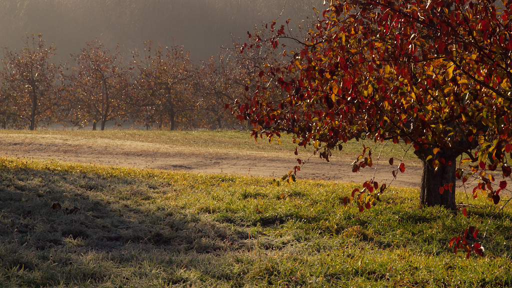 Leaves on the trees, frost on the grass, fog in the air. I gotta get into apple orchards more often.