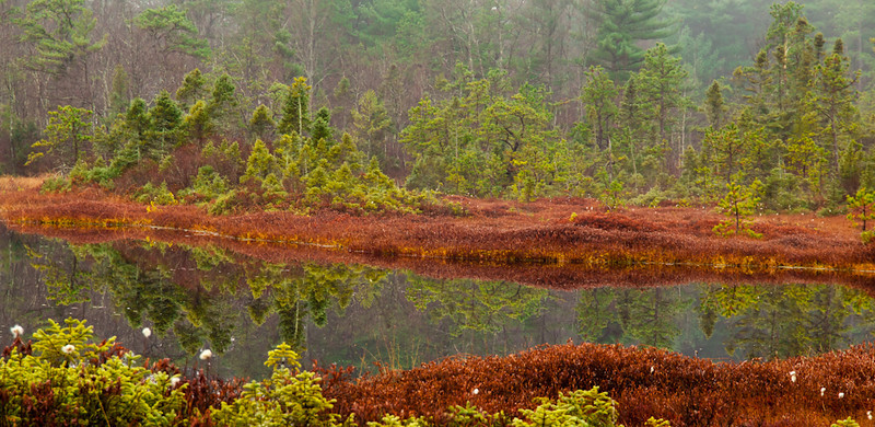 Reflection in Ponemah Bog's pond. The little bit of fog left in the air makes the trees just pop. It's a little soft because I had to handhold this, but I really like the textures and the colors.