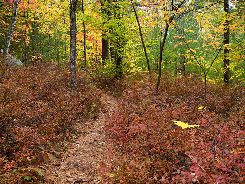The color in Bear Brook State Park comes high and low.