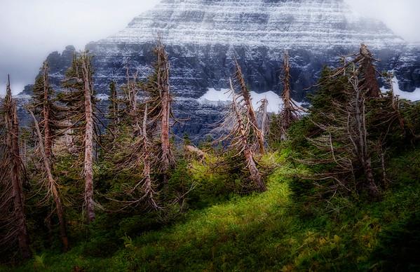 View at Logan Pass