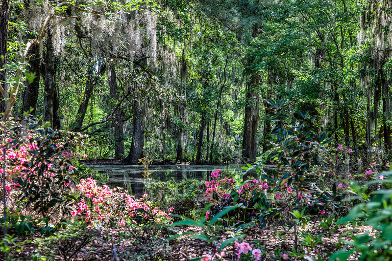 Charleston, Magnolia Gardens