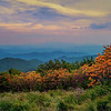 Flame Azeales at Roan Mountain