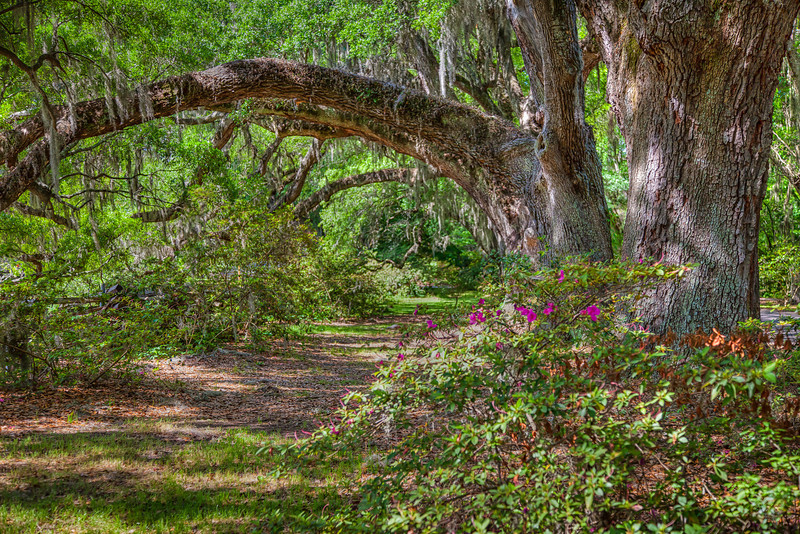 Charleston, Magnolia Gardens..
