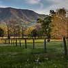 Just after entering Cades Cove, pass the horses, where all the turkeys hang out.   That is a turkey on the right side of the fence.