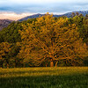 THE TREE!!  Probably one of the most photographed trees in Cades Cove.
