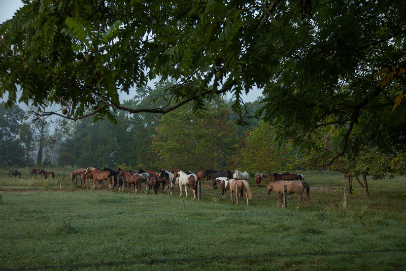 As you come into  Cades Cove the horses are sometimes out.