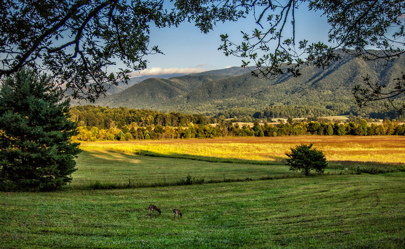 Taken off of the main loop road in Cades Cove.