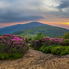 Roan Mountain, Jane Bald