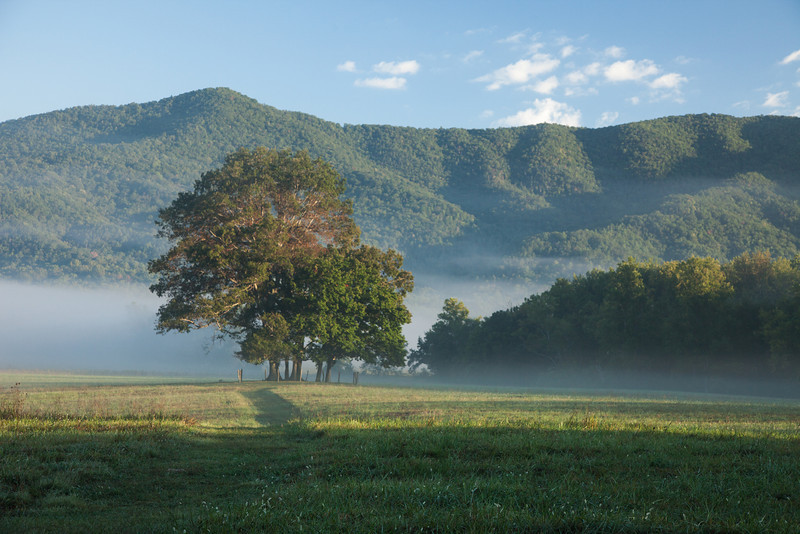 Cades Cove as you turn left off of Hyatt Rd on the way back to the exit.
