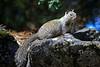Squirrel0934
