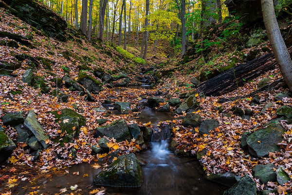 Dundas Valley Stream