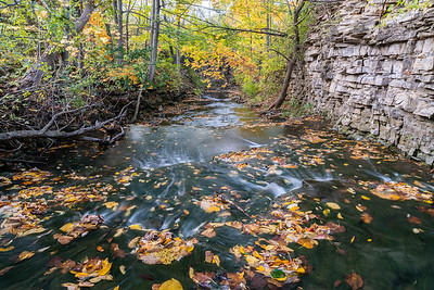 Autumn At Felker's Cascade
