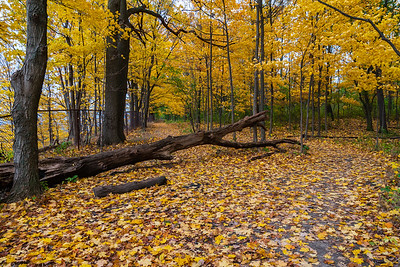 Hamilton Mountain Leaves