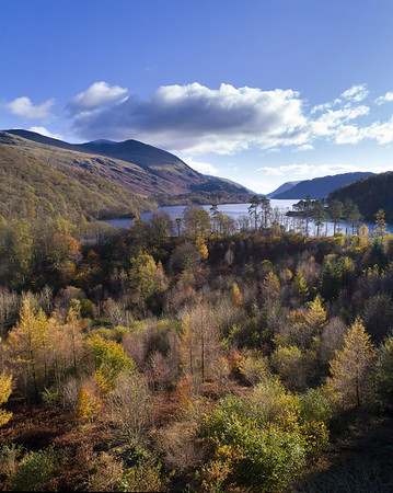 Illumintated Trees Thirlmere