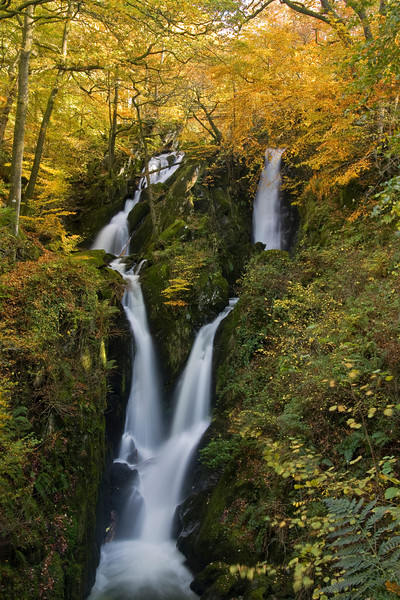 STOCKGHYLL FORCE  #1      -50