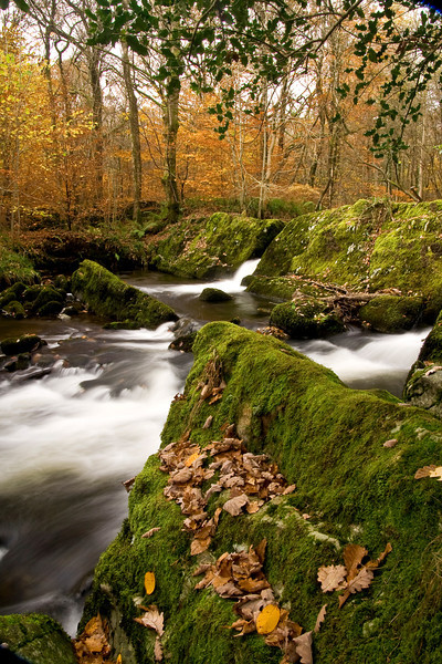 AUTUMN STREAM GRIZEDALE