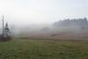 Fog Farm