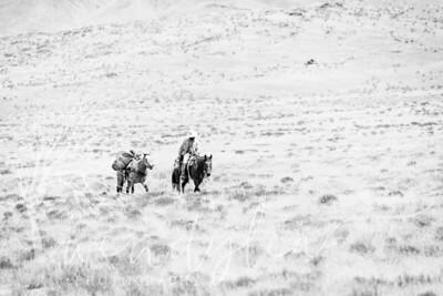 wlc  Z&B wild horses 1582019