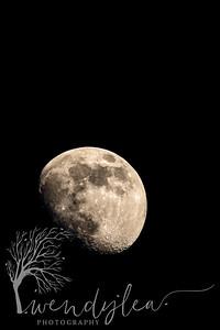 wlc moon horese head42020