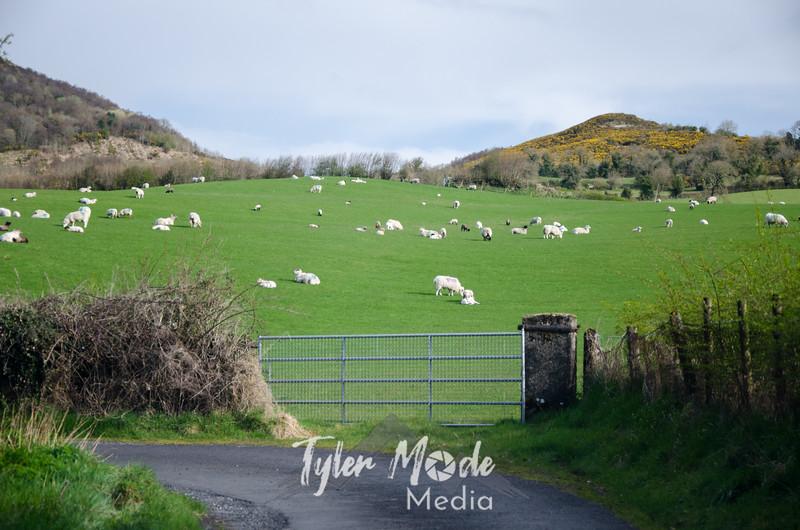 17  B Sheep and Gravel Road