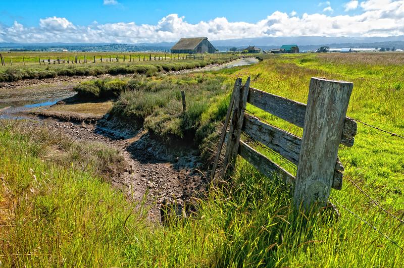 Arcata Bottoms 2012-06 001 Humboldt-CA-USA_nikEP-TC