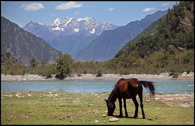 Horse gazing along the stream