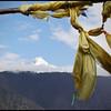 Namcha Barwa Peak (南迦巴瓦峰) from afar