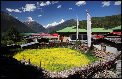 Wildflowers and village near Lake Ba Song Cuo (巴松措)