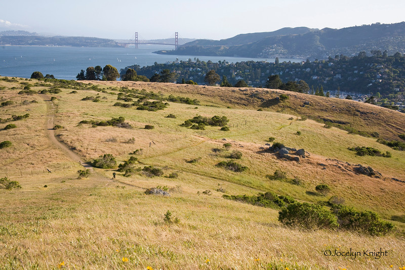 """GG View - 2700 - View from the upper area of the Old St. Hilary Preserve towards the Golden Gate Bridge over land privately owned and slated for development known as """"The Martha Property."""" This land is the last 110 acres of open space at the tip of the Tiburon Peninsula and is immediately adjacent to the Old St. HIlary Preserve."""
